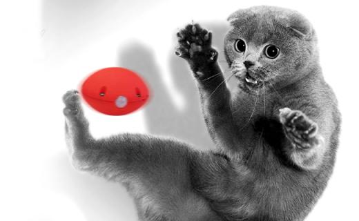 猫奴翻身做主人,这个小圆球一招搞定喵星人