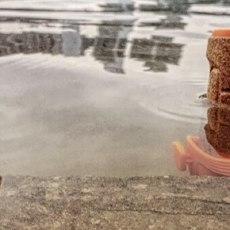 当莫拉刀会游泳,你的鞋就要小心了。