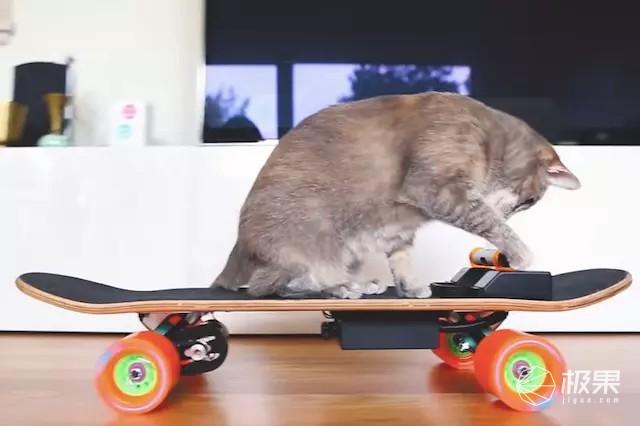 老外为爱猫打造专属电动滑板,喵星人又有新玩具!