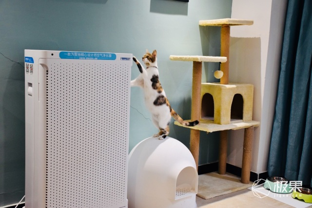 异味不再是烦恼,我家猫咪就爱它,安美瑞宠物空气净化器体验