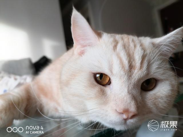 华为nova4拍照评测:表现强悍玩法多样的拍照神器