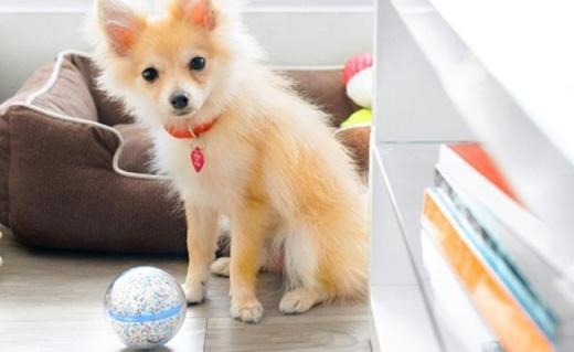 能射激光能录像的球球,让你不在家也能逗猫遛狗