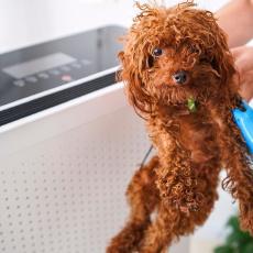 家有宠物不忧愁,安美瑞空气净化器宠物版,吹出清新好空气