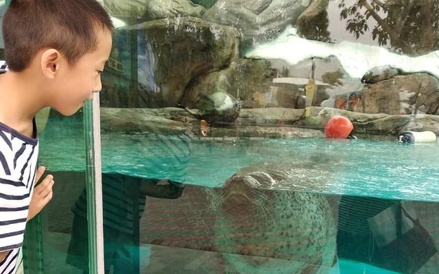 斐讯W3运动手环体验,与儿子一同畅游海洋公园