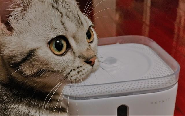 再见水碗,这才是正确的喝水方式:小佩PetKit智能饮水机体验