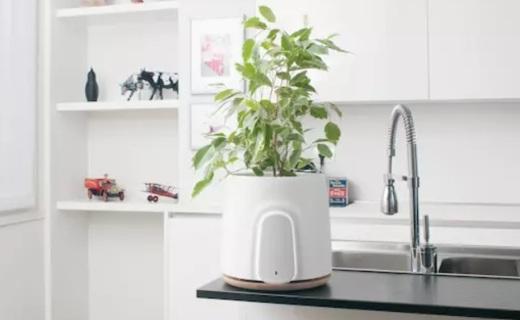 99%除菌去异味,这款空气净化器居然能养花!