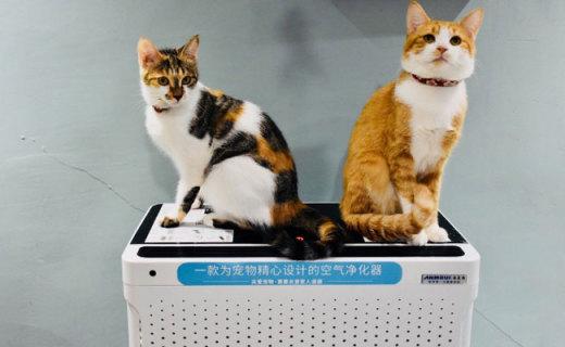 異味不再是煩惱,我家貓咪就愛它,安美瑞寵物空氣凈化器體驗