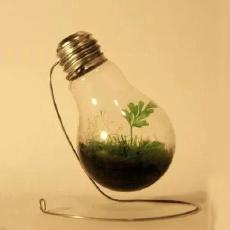 1块钱一只的灯泡,国外妹子改造后价值竟上升1000倍!
