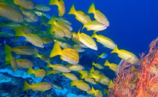 带着神器逛逛海底世界,让你成为海王梦回亚特兰蒂斯——泰鼎水中飞行器