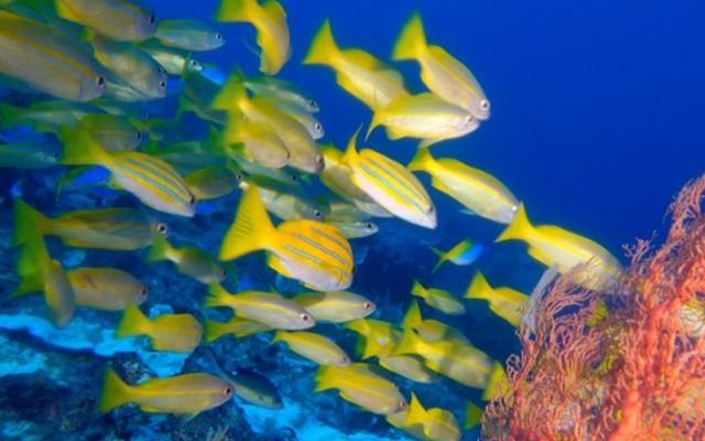 带着神器逛逛海底世界,让你成为海王?#20301;?#20122;特兰蒂斯——泰鼎水中飞行器