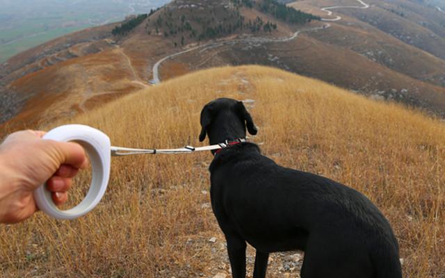 自带手电的智能遛狗绳,科学遛狗更轻松 — 小佩Petkit智能牵引绳体验 | 视频