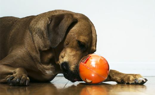 手机控制的玩具球,在哪你都可以逗宠物