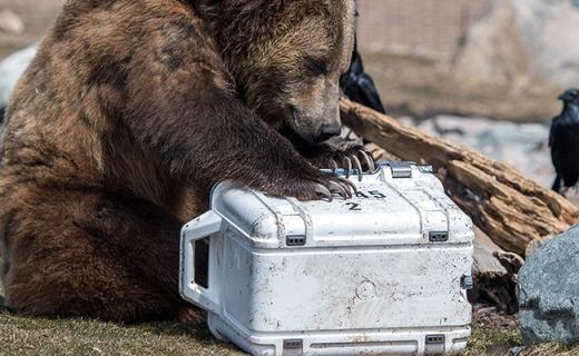 史上最强保温箱,保冷14天棕熊遇上也无可奈何!