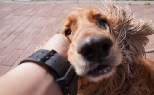 """这款狗狗定位器,帮老中医专治""""撒手没""""— 陪彼宠物狗狗定位器体验"""