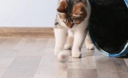 自动逗猫狗,内置算法智能启停,宠物独居神器众筹中