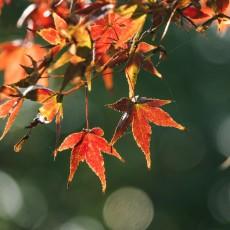 选一个宜人的周末,来张家港,听秋叶落地的声音