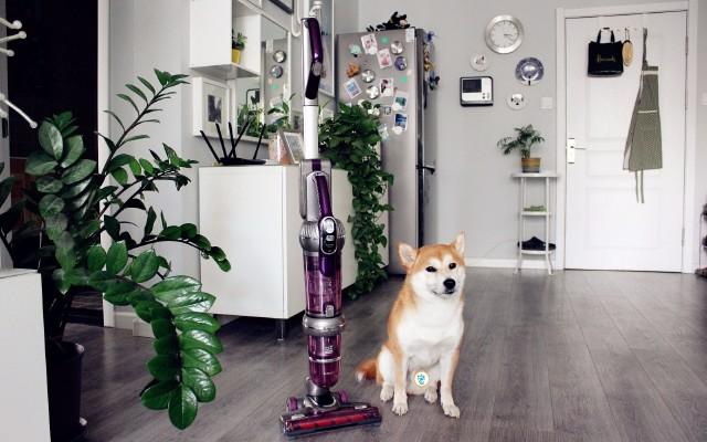 宠物之家的私人订制吸尘器,有了它再也不怕狗毛乱飞
