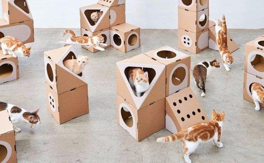 过年你家猫怎么办?这个环保猫公寓可以一试