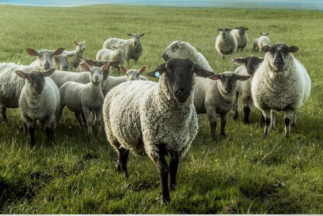 CRIA(可瑞乐)全羊毛保暖被