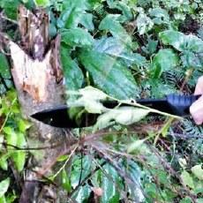 超锋利汉道户外直刀,一刀竟能斩断碗口粗的树
