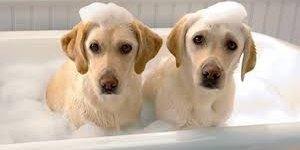 宠物烘干机亮相CES 2019 : 猫狗均可使用,售价4479元