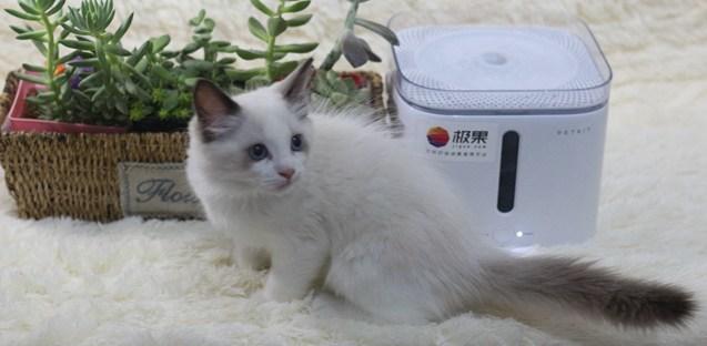 宠物爱不释嘴的饮水机,小佩宠物智能饮水机体验