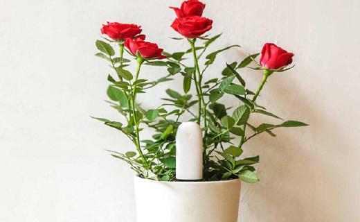 花草专用检测器,浇水施肥随时提醒更省心