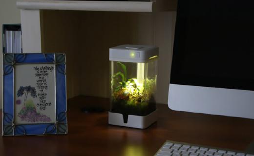摆在桌上的花园:OrchidBox,智能控温控水还拟光